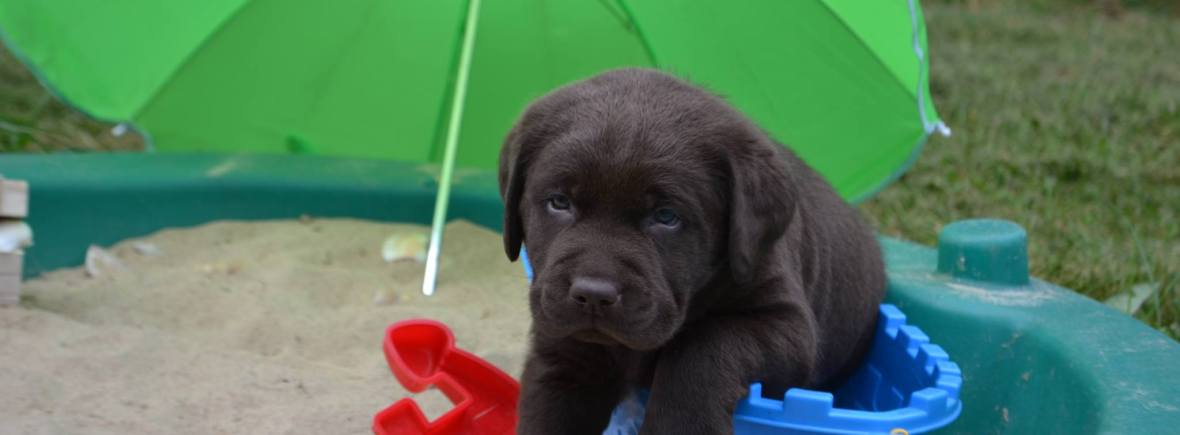 Visit Our Kennel Winter Valley Labs Mlk