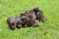 bowepuppies1