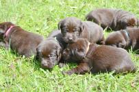 bowepuppies2