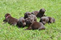 bowepuppies3