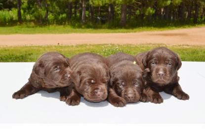 bowepuppies4
