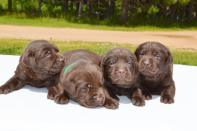 bowepuppies5