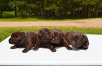 bowepuppies7