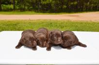 bowepuppies8
