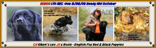 Rosie x Leo