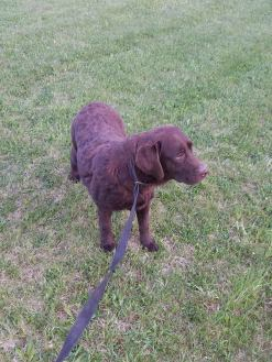 des-the-chocolate-lab-5